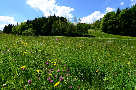 verano, Prado, hierba, naturaleza, soleado, campo, verde