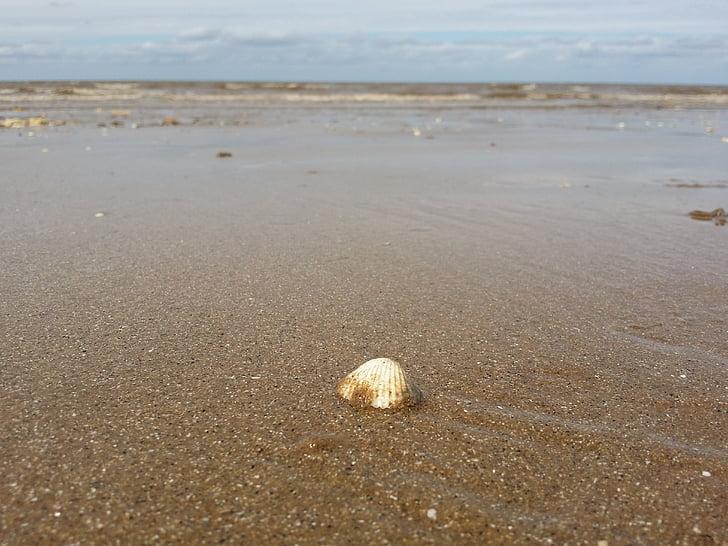 closca, Mar, platja, closca