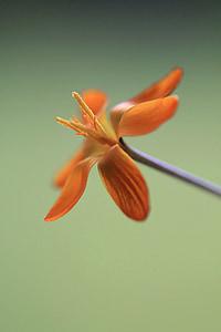 flower, stamen, nature, plant, blossom, petal, floral