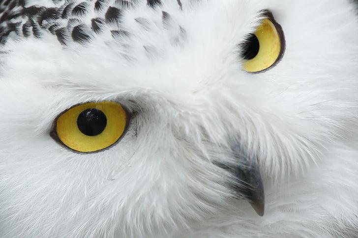 hewan, paruh, Cantik, burung, mata, mata, bulu