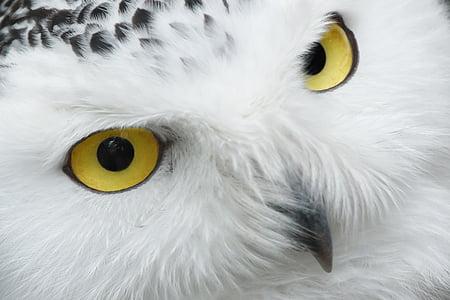 동물, 부리, 아름 다운, 새, 눈, 눈, 깃털