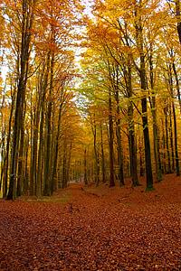 Sonbahar, Orman, sandalye Kral, Rügen, yaprakları, sonbahar renk, sonbahar orman