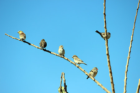 birds, branch, sky, morning