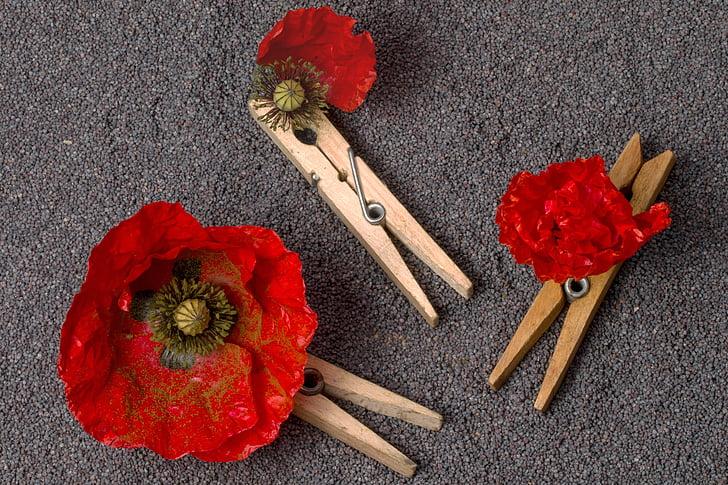 Poppy, klatschmohn, moonid-kleebitavad, seemned, mooniseemned, clothespins, punane
