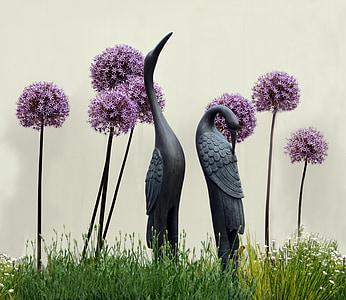 camp, ocell, vida silvestre