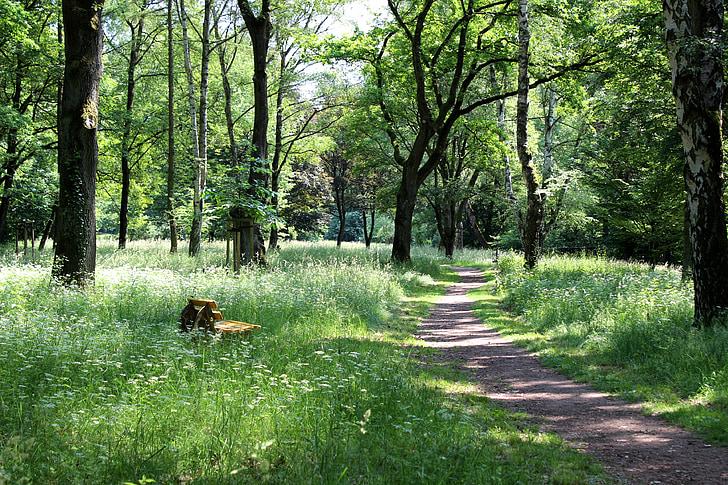 camí del bosc, Banc, resta, idil·li, primavera, bosc, Prat
