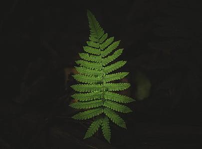 zelená, dlanitě, list, listoví, tmavý, zelená barva, závod