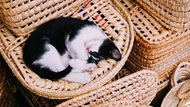 blanc, negre, gat, dormint, gatet, son, animal de companyia