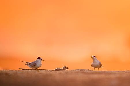 две, птици, мацка, макрос, изстрел, фотография, животните