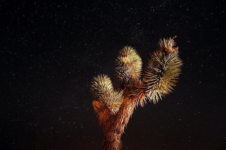 ciel nocturne, étoiles, désert, paysage, Cosmos, Joshua tree, étoilé