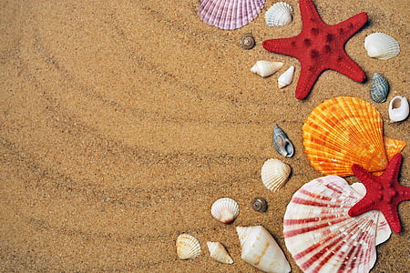 mar, areia, Costa, praia, conchas do mar, férias, natureza
