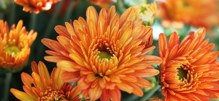 flors de taronja, jardí, l'estiu, taronja, flor, natura, flor