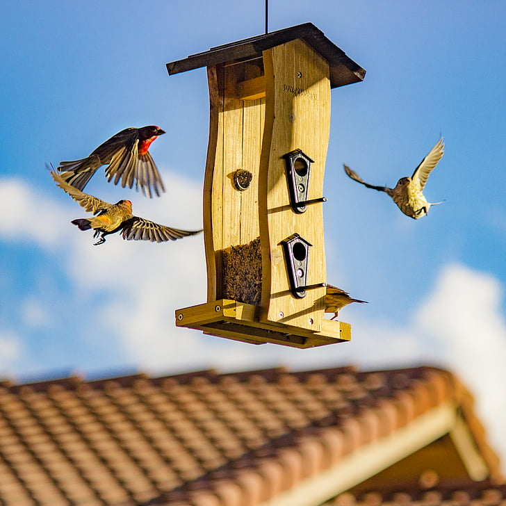 arkkitehtuuri, Bird house, linnunpönttö, Linnut, katto, puinen