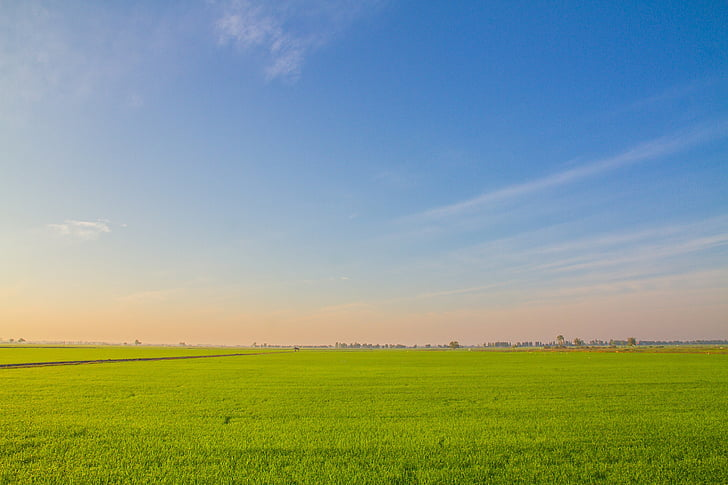 image view, cornfield, rice, field, farmland