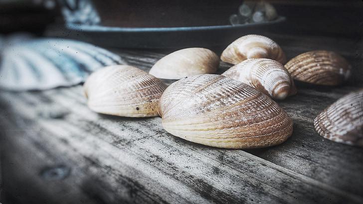 Shell, dřevo, Zátiší