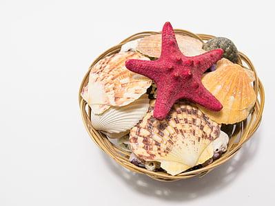 closca, Mar, petxina de mar, estrella, estrella de mar, estrella de mar, animal