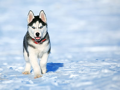 adorable, animal, breed, canine, cold, cute, dog