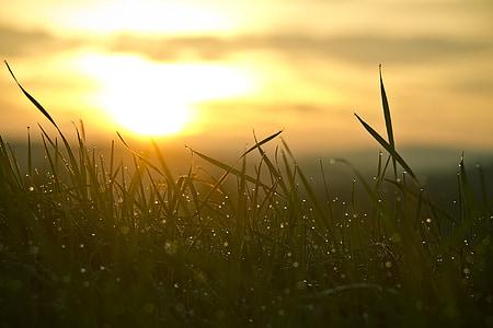 herba, Alba, tròpics l'aigua, sol, cel, natura, estat d'ànim