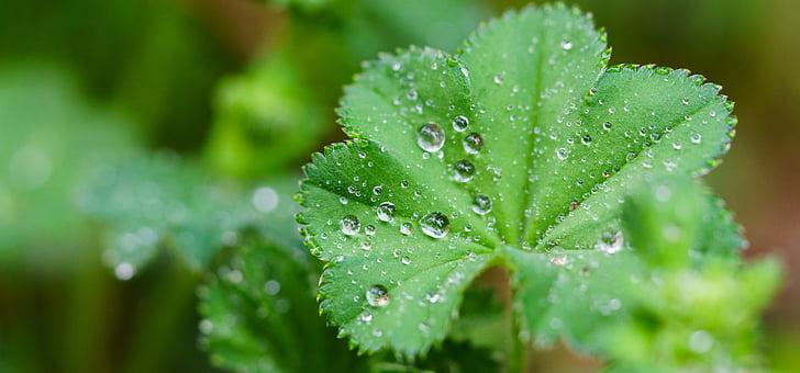 лист, крапельне, дощ, макрос