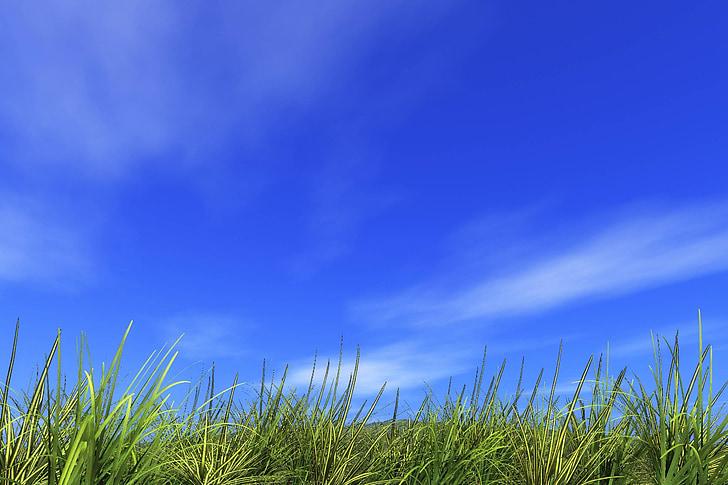 refrescant, turó, camp, l'estiu, terra, sol, clar cel