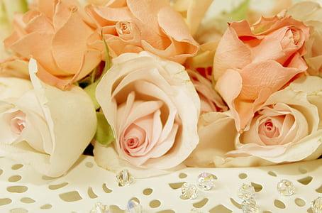Roses, placa, romàntic, flor, flor, dia de Sant Valentí, casament