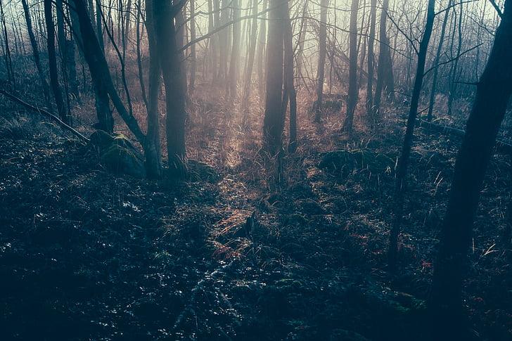 bosc, sotabosc, Selva, natura, Selva, arbres, selva Tropic