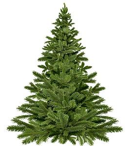 christmas tree christmas, christmas, pine, happy holidays, twigs, needle, holidays
