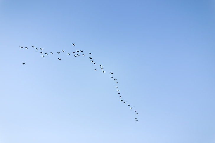 sky, migratory birds, new, blue