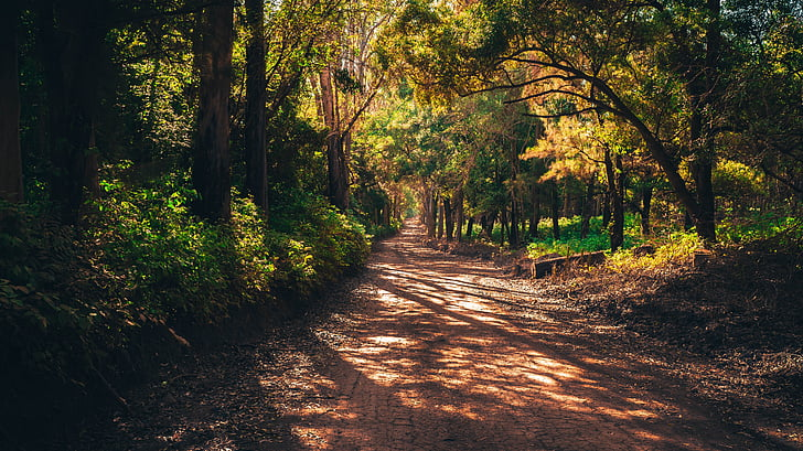 lasu, Mato, drogi, Infinity, piękno, roślina, zielony