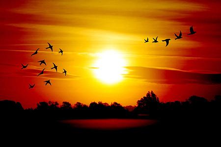 Alba, ocells, morgenstimmung, cels, paisatge, atmosfèrica, sol