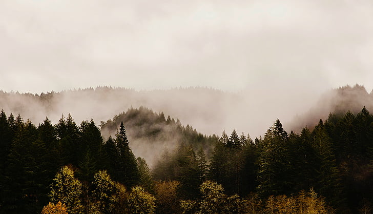 oregon, mountains, sunrise, dawn, fog, forest, trees