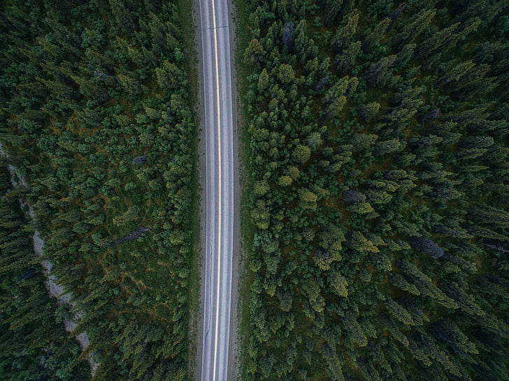 aerial, photography, grey, concrete, road, dense, forest
