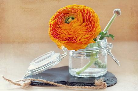 Blume, Frühlingsblume, Orange, Vase, Glas, Glas, Ranunkeln