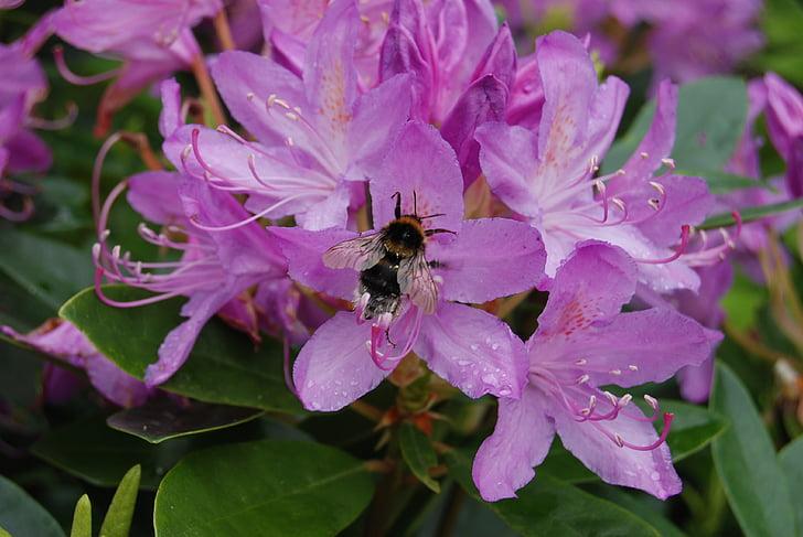 abella, neret, flor, insecte, floral, planta, natural