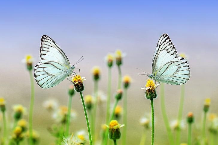蝶, 昆虫, マクロ, 動物, 自然, 春, ガーデン