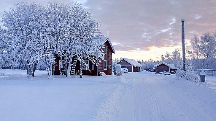 kỳ nghỉ, wintry, tuyết, cây, tuyết rơi
