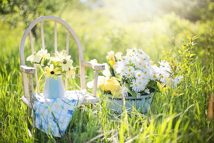 letní zátiší, sedmikrásky, žlutá, zahrada, květiny, květ, tráva