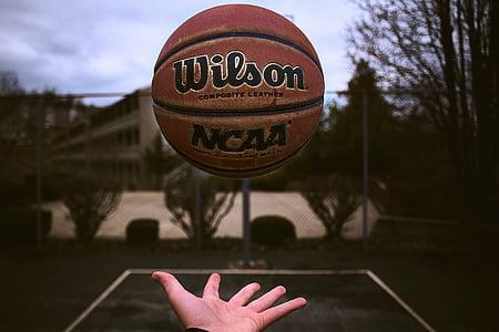 bola, basquete, desporto, jogo, aptidão, mão, Palm