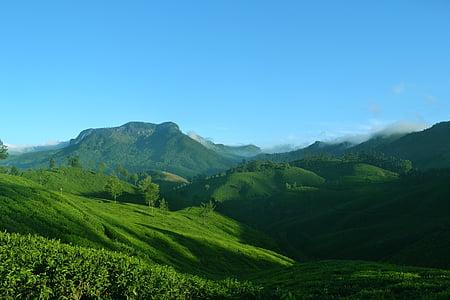 Munnar, Kerala, Indija, priroda, krajolik, čaj, plantaža