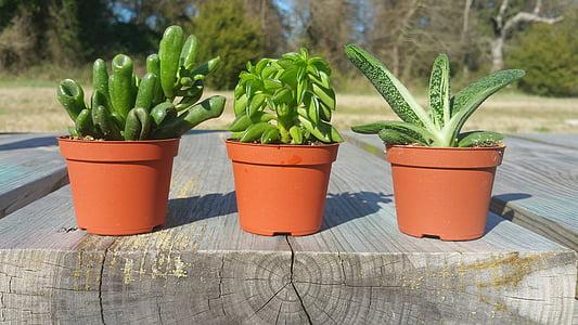 piante grasse sul banco, piante grasse, piante verdi sul banco