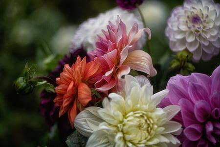 flower, colorful, botany, bloom, blossom, fresh, floral