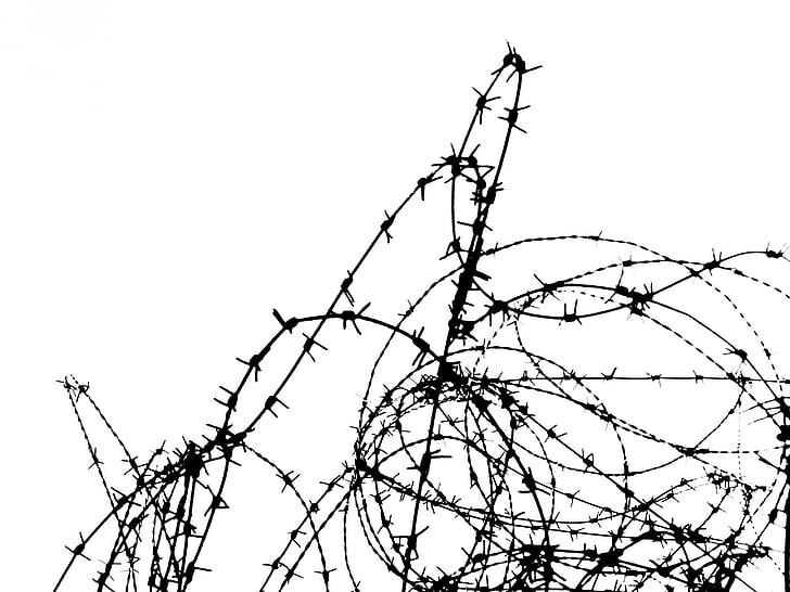 fil barbelé, fense, frontière, fil, protection, noir et blanc, protégé