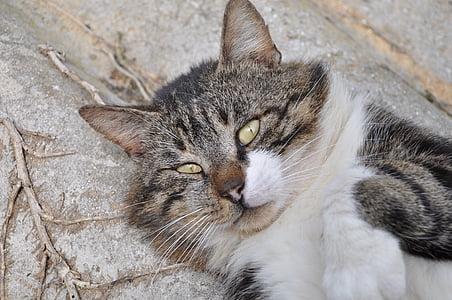 cat, cat's eyes, eyes, pet, feline, domestic animal, cat eyes