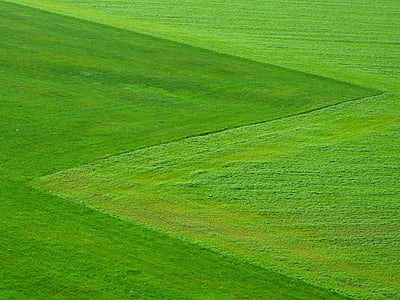 meadow, green, grass, nature, landscape, square, agriculture