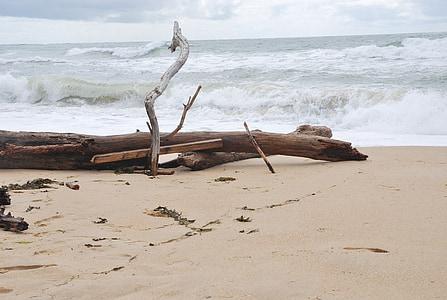ocean, waves, beach, atlantic, scum, landscape, driftwood