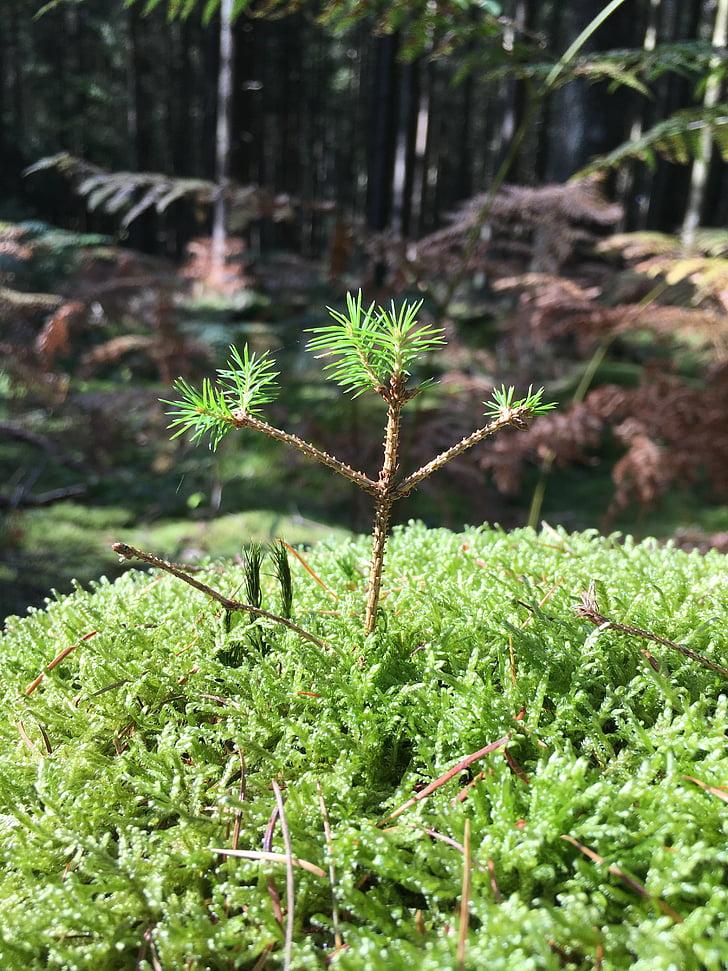 plàntula, Scion, bosc, motor, nou començament, viuen nou, natura