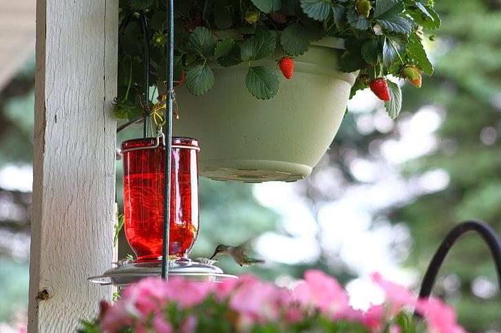 hummingbird, bird, flying, nectar
