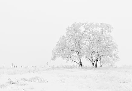 winter, nature, season, trees, sky, snow, white