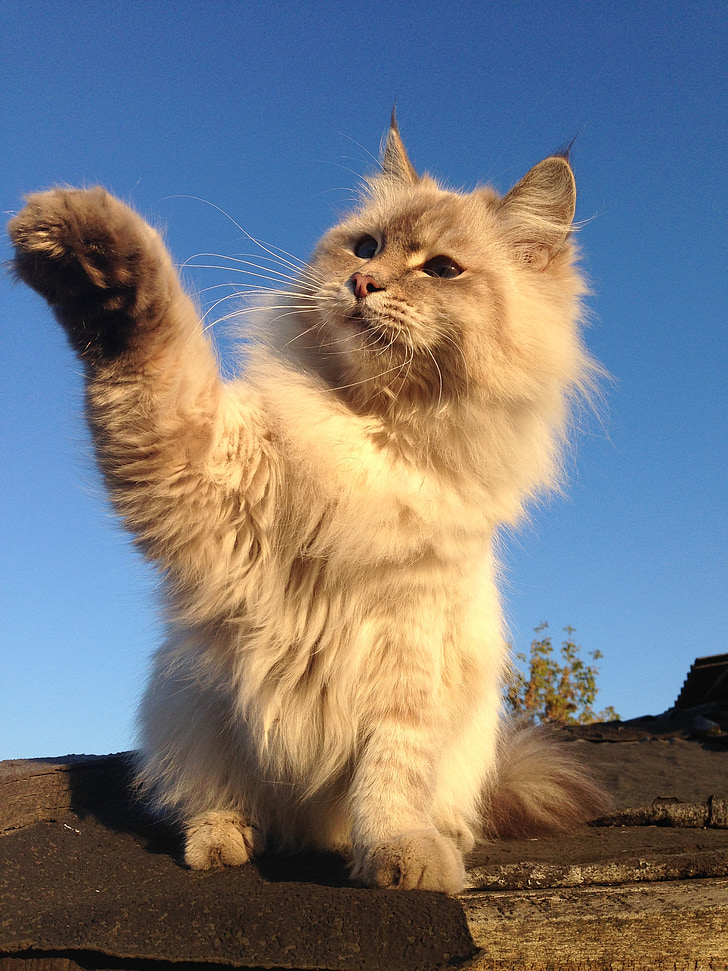 mladá malá mačička obrázky