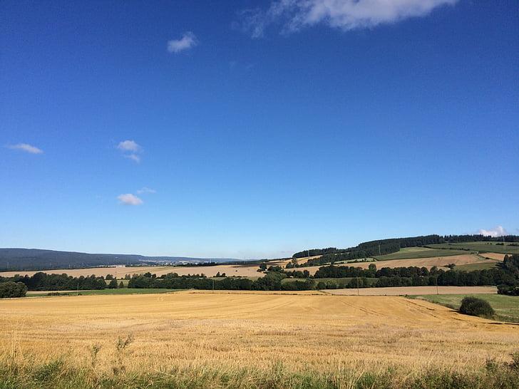 summer, sky, field, blue sky, clouds, cornfield